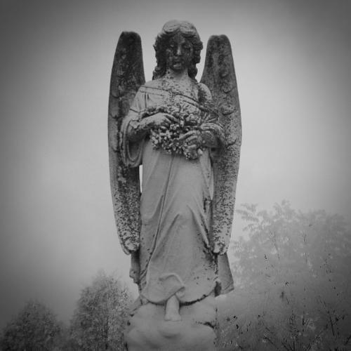 Dark Angel 19.5 Pictorial Gold Ian Porszt