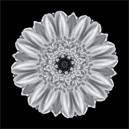 Monochrome Flower 23.5 Creative Silver HM SPP Claudia Povilauskas