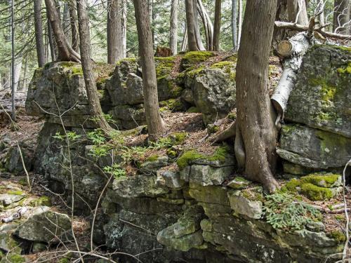White Cedar Amongst Rocks  19.5 Nature Gold John Sharman