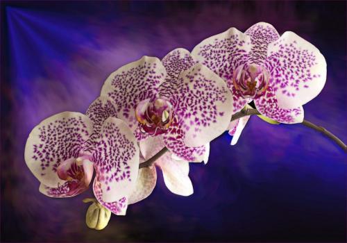 Orchid Beauty 20.5 Creative Gold Kathy Ward
