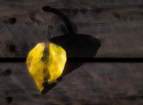 A Golden Leaf 21.5 Creative Gold Kathryn Martin