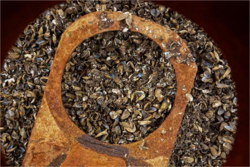 Zebra Mussels 20.5 Pictorial Silver Janet McNally