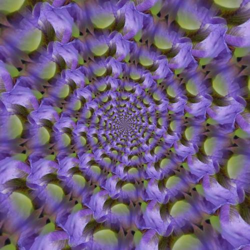 Iris Spiral 7 7.5 7.5 22 Leonie Holmes  Creative Gold