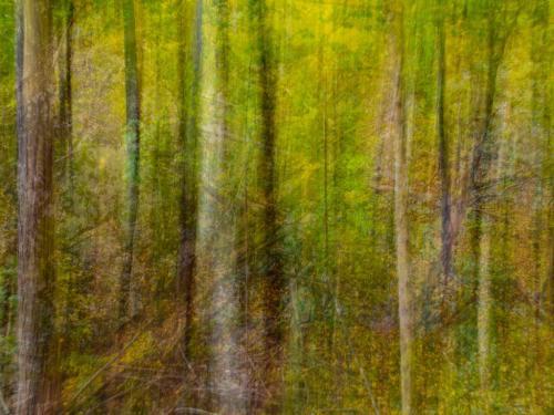 Ghost Of Trees Past 6.5 6.5 6 19 Dan Copeland  Creative Master