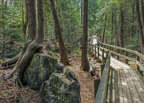 Walk Thru The White Cedar Forest 22 John Sharman  Pictorial Gold
