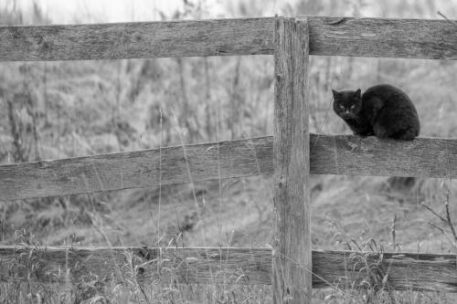 Black Cat 23.5 HM SPP Geoffrey Skirrow  Pictorial Silver