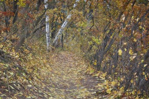 Enchanted Forest 21 Victor Turczynski  Creative Gold