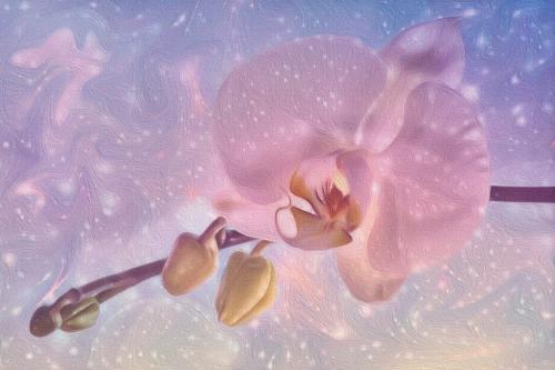 Phalaenopsis Orchid 22.5 Kathy Ward  Creative Gold