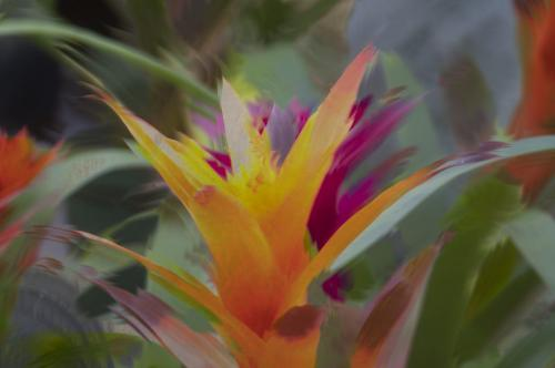 Vivid Flower Painting 22 Judy Boufford  Creative Gold