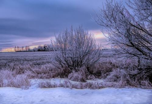 Frosty Morning 20 John King  Pictorial Silver