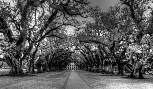 Oak Alley Plantation, Louisiana 22.5 Jim Maguire  Pictorial Gold