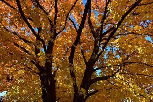 Fiery Fall Colours 20 Loretta Monteleone  Pictorial Bronze