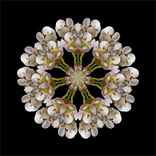 Circular Bouquet 9 8 7 24 HM GPP Claudia Povilauskas  Creative Gold