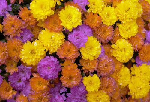 Flower Display 9 7 7 23 GPP Leonie Holmes  Pictorial Gold