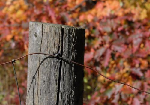 Fencepost Detail 6 7 7 20 Ian Porszt  Pictorial Gold