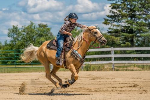 Gallop 8 7.5 8.5 24 HM GPP Kathy Leisti  Pictorial Gold