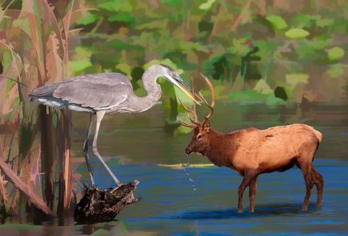 Heron'S Catch 7 8 7 22 Don Poulton  Creative Master