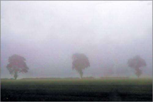 Scotish Mist 7 5 6.5 18.5 James Hamilton  Pictorial Gold
