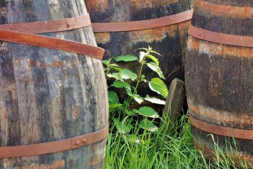 Old Whisky Barrels 7.5 6 7 20.5 James Hamilton  Pictorial Gold