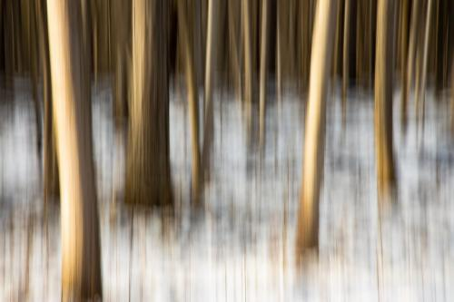 Westfield Winter Woods 9 7.5 7 23.5 GPP David Evans  Creative Gold