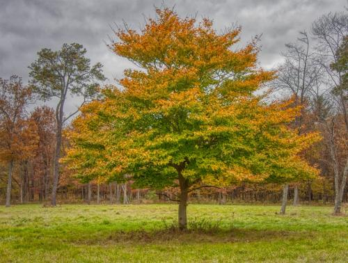 Beech Tree 7 7.5 6.5 21 Don Poulton  Pictorial Master