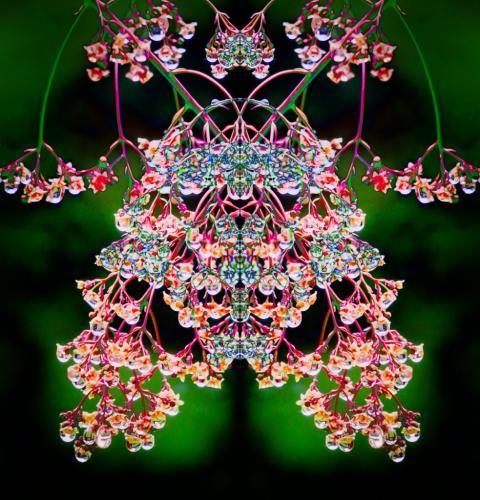 Dewdrops On A Smoke Bush 6 7 8 21 Patrick Mohide  Creative Gold