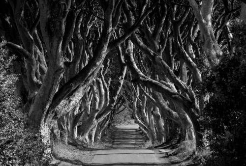 The_Dark_Hedges_Northern_Ireland 7.5 7.5 8 23 BPP Thomas McGory  Pictorial Bronze