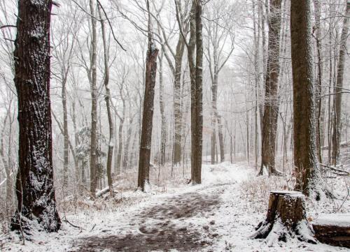 Fresh Snow 7 8 7.5 22.5 David Evans  Pictorial Gold