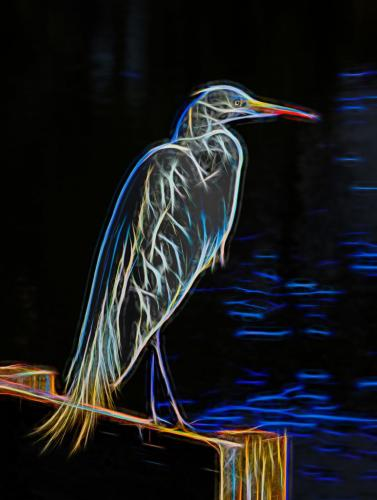 Electric Egret 7.5 8 7.5 23 Don Poulton  Creative Master