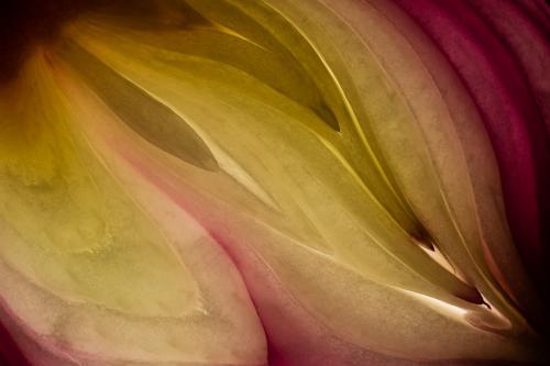 Red Onion 7.5 8.5 8 24 GPP Geoffrey Skirrow  Pictorial Gold
