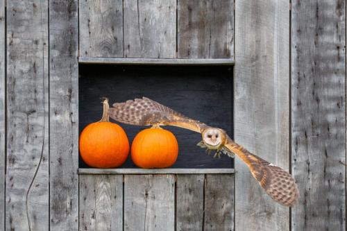 Barn Owl 7 7 7 21 Marcus Kelly  Nature Silver
