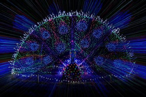 Peacock 7.5 8 8 23.5 Doug Doede  Creative Master