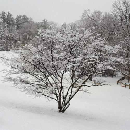 Winter 2020 7 6.5 7 20.5 John Bunyon  Pictorial Silver