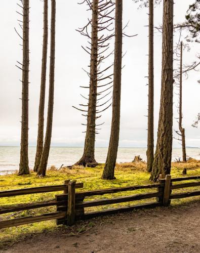 Windblown Coastal Trees 7 7 6.5 20.5 David Evans  Pictorial Gold