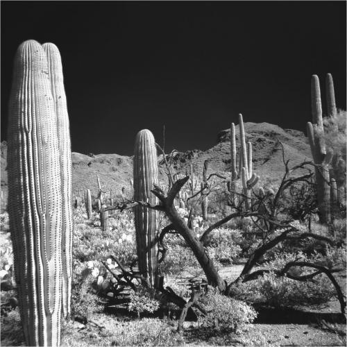Desert In Ir 6 7.5 6.5 20 Ian Porszt  Pictorial Gold